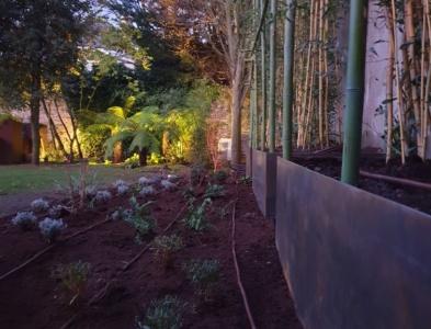 Bac en corten – Bambous géants